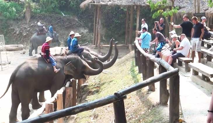 Слоновья деревня в Тайланде